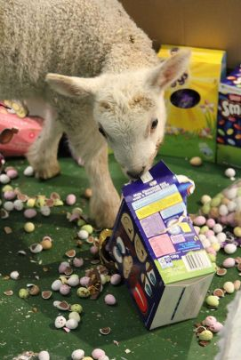 Lambs-with-Easter-Eggs