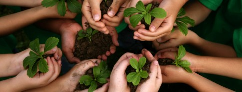 kids-hands-holding-plants-yolo-farm-to-fork-845x321