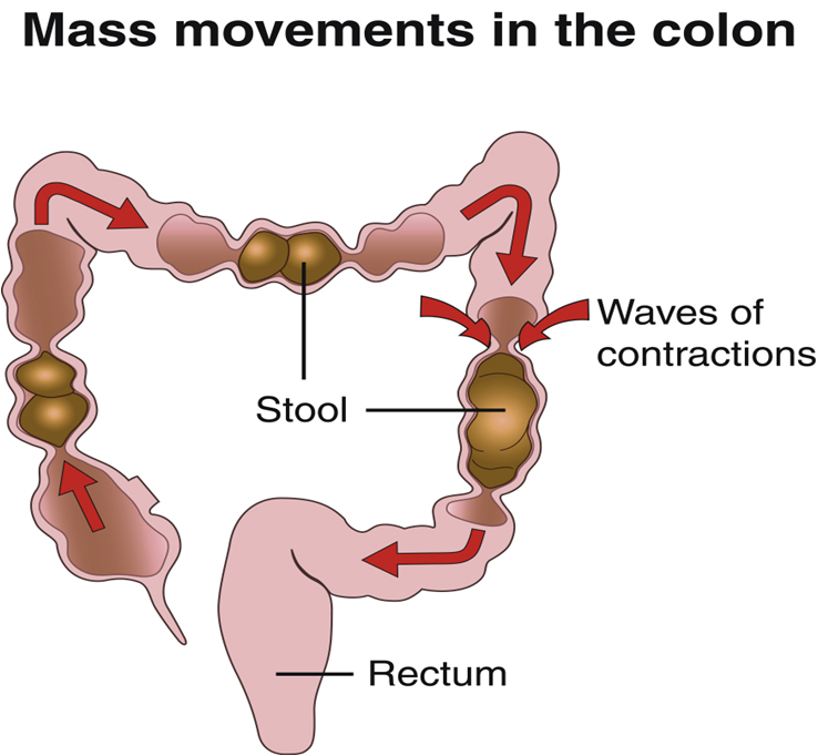 bowel+movements