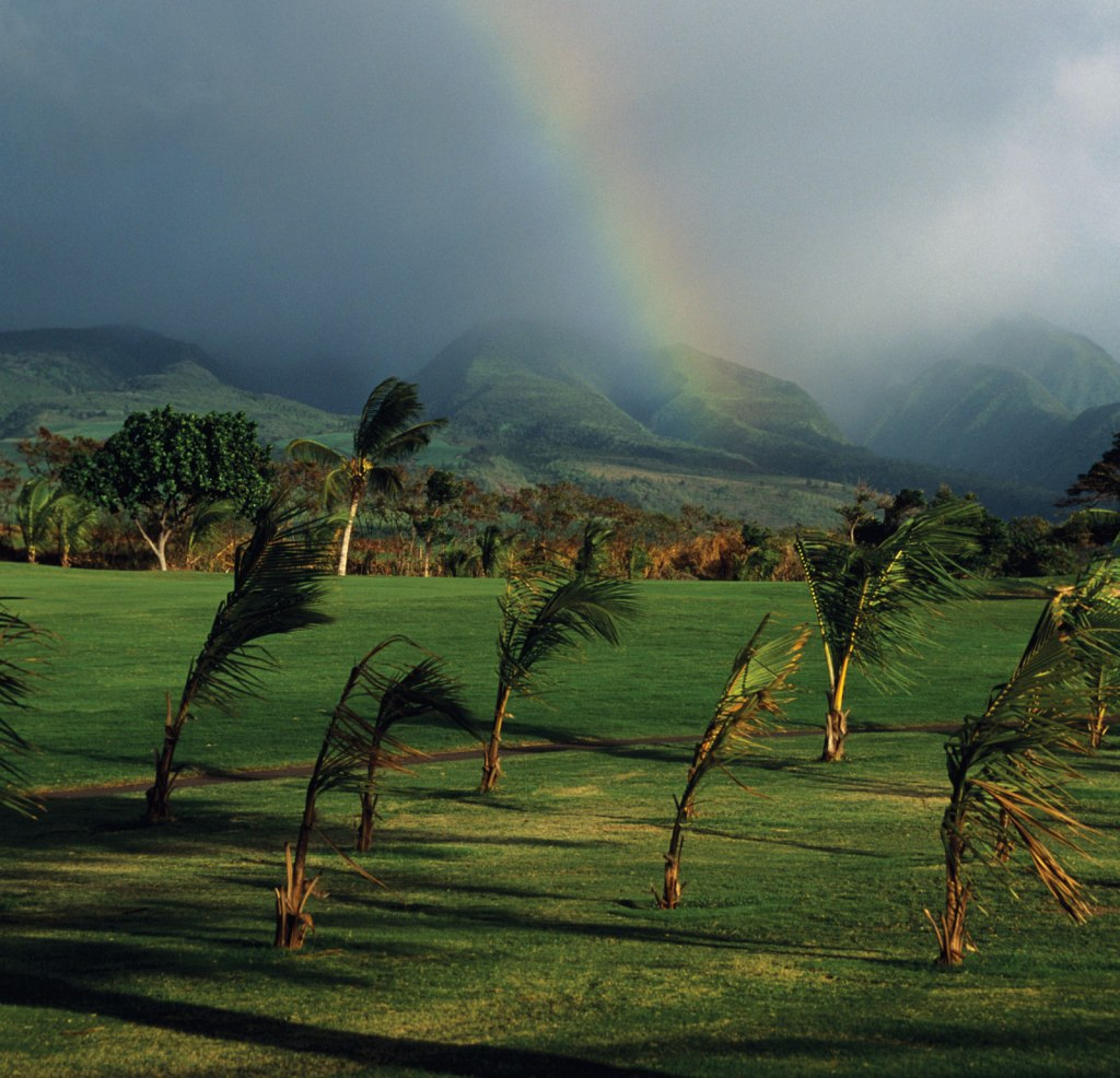 Wind-palm-trees-golf-course-Hawaii-Maui